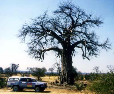 baobab4x4.jpg
