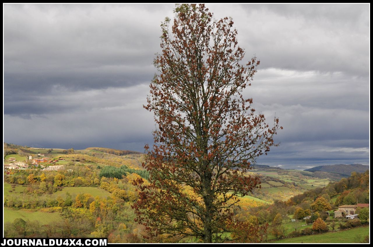 paysage-arbre.jpg