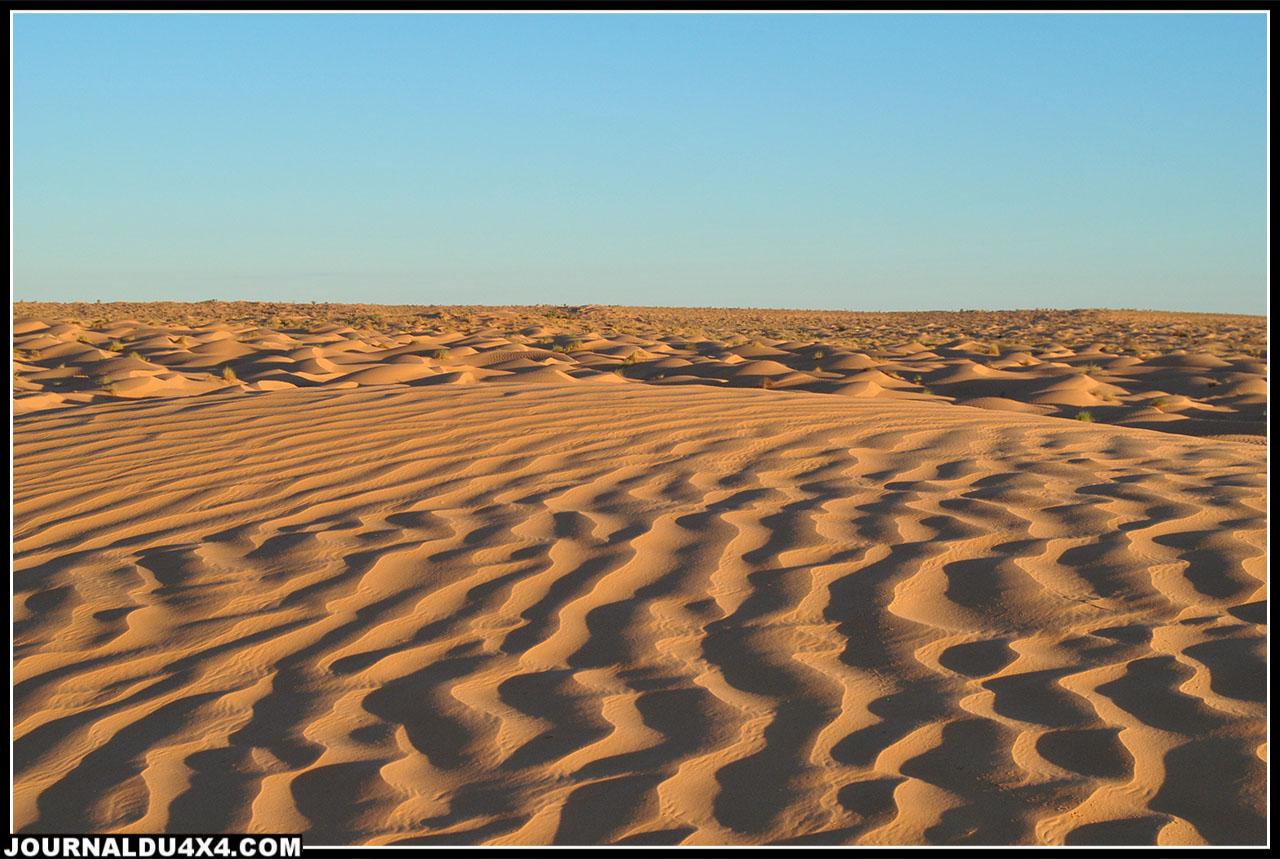 les dunes autour de l'oasis de Gsar Ghilane