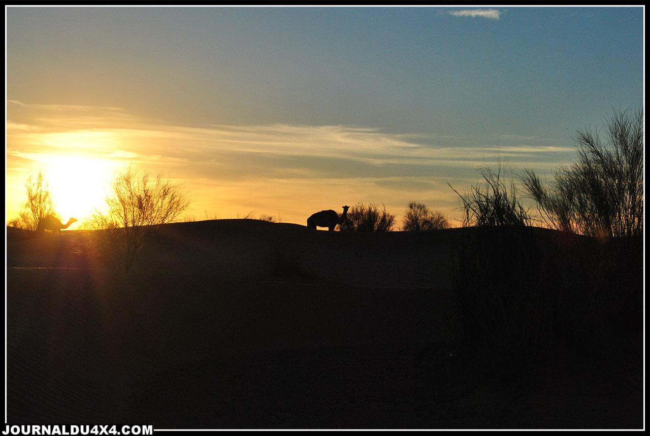 coucher de soleil avec une visite de dromadaires près de notre bivouac