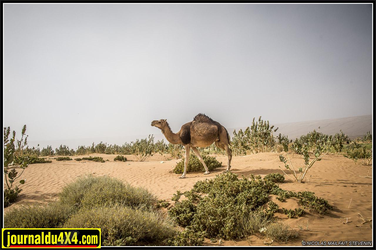rallye-des-gazelles-2016-8010-2.jpg
