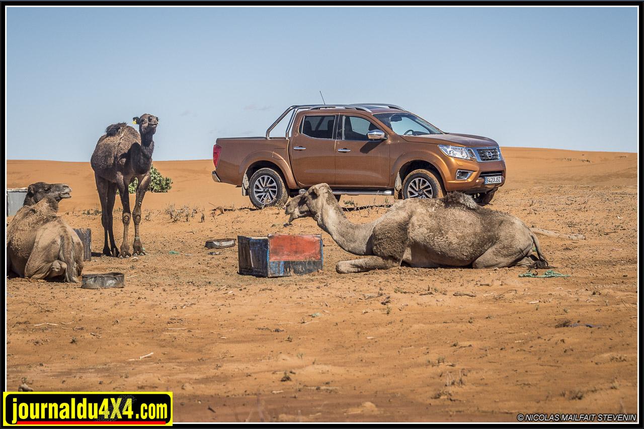 Essai Nissan Navara sur les pistes et dans les dunes au Maroc