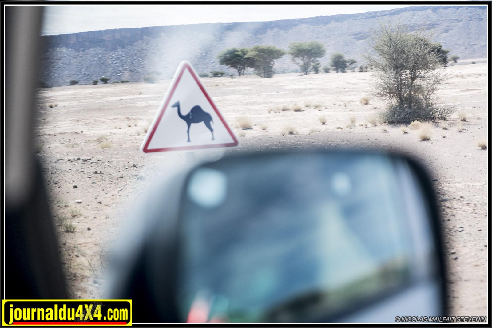 rallye-aicha-gazelles-maroc-2017-6733.jpg