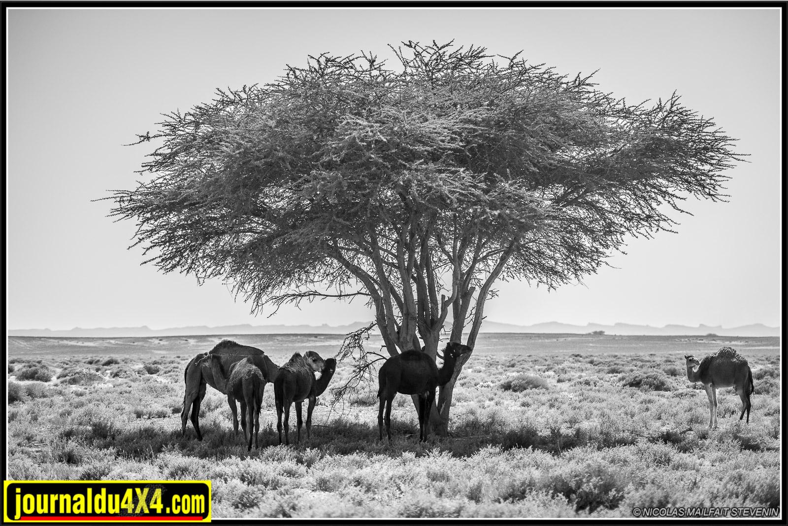 rallye-aicha-gazelles-maroc-2017-7866.jpg